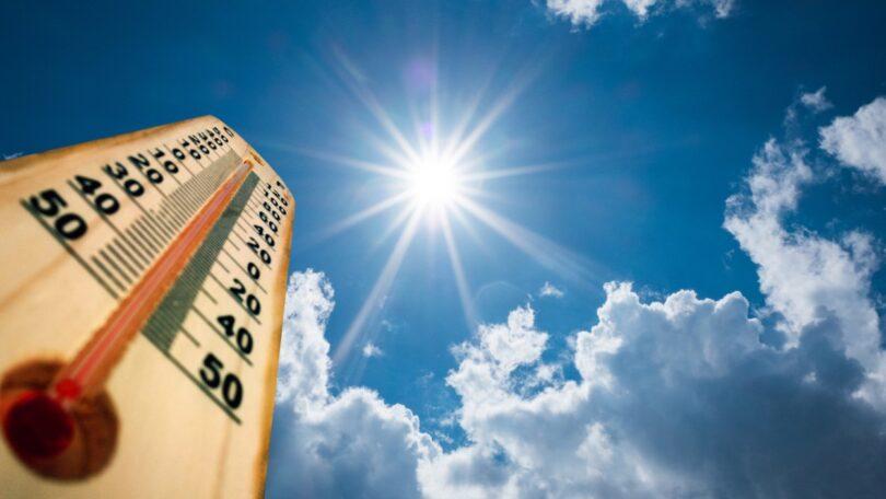 A #protectourfuturetoo alertou que as vagas de calor que ocorreram nos últimos dias afetam a saúde dos animais de companhia.