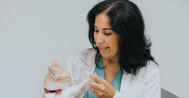 A professora auxiliar da FMV-ULisboa Lisa Mestrinho integrou o Congress Steering Committee da World Small Animal Veterinary Association.