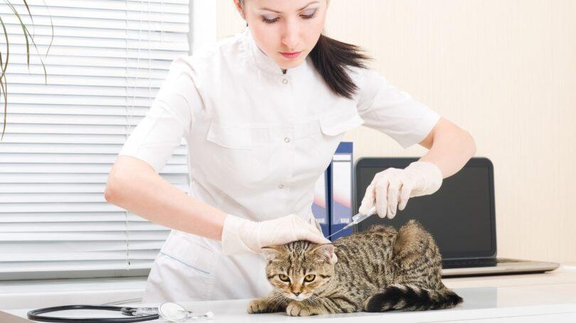A BVA alertou recentemente para os problemas dos serviços veterinários no Reino Unido, como escassez de pessoal e a alta procura.