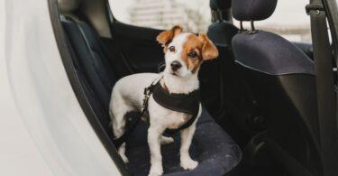 A Contesta Multas, da CRS Advogados, explicou a legislação à volta do transporte de animais de companhia em automóveis.