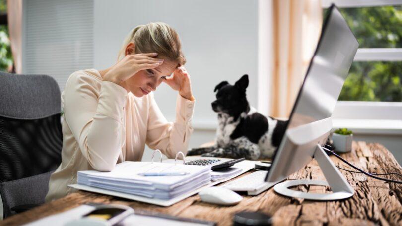Um estudo da Universidade de Linköping descobriu que a relação que o cão tem com o seu titular está relacionada com o seu nível de stresse.