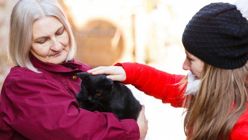 Um estudo descobriu que as proteínas-chave ligadas às doenças cognitivas em gatos são encontradas de forma semelhante também em humanos.