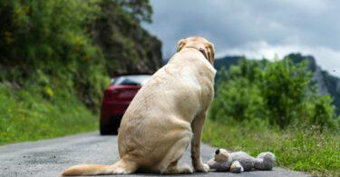 A PSP e a GNR revelaram que já registaram 349 crimes de abandono animal este ano, até julho, sendo menos que os do período homólogo.