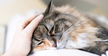 A Royal Vet College (RVC) revelou que 555 gatos já foram afetados pelo surto de panleucopenia felina que está a ocorrer no Reino Unido.