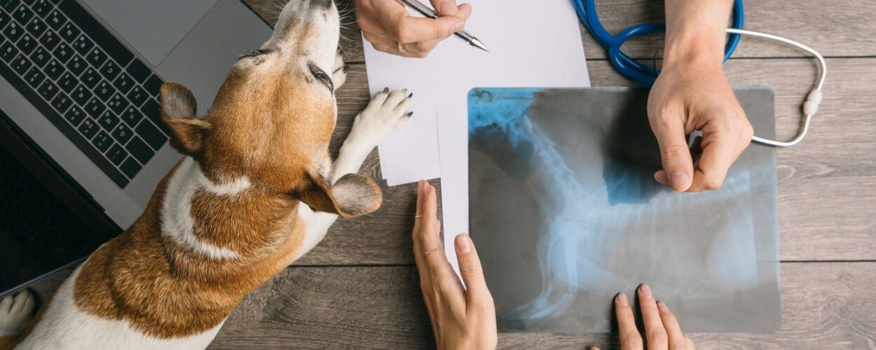 """A APMVEAC e a AIMD denunciam que a interpretação da APA do novo decreto-lei sobre a radiologia """"põe em causa os cuidados de saúde prestados""""."""