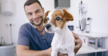 """""""Cómo mantener la motivación del personal en el centro veterinario?"""" é o nome do novo livro editado pela editora Servet."""