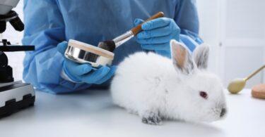A Dove e a The Body Shop assinaram a Iniciativa de Cidadania Europeia para salvaguardar a cosmética livre de testes em animais na Europa.