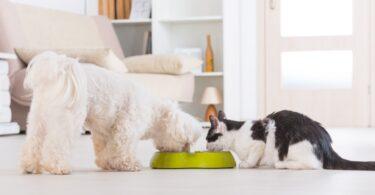 A empresa de produtos veterinários Dechra está a promover um webinar em direto sobre o maneio nutricional no paciente crítico.