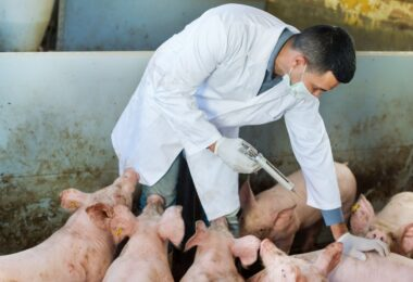 A moção do Parlamento Europeu para a proibição da utilização de antimicrobianos autorizados vai a votos hoje, dia 15 de setembro.