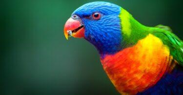 """Alguns animais estão a """"mudar de forma"""", resultando em alterações nos bicos, pernas e orelhas, face às alterações climáticas."""