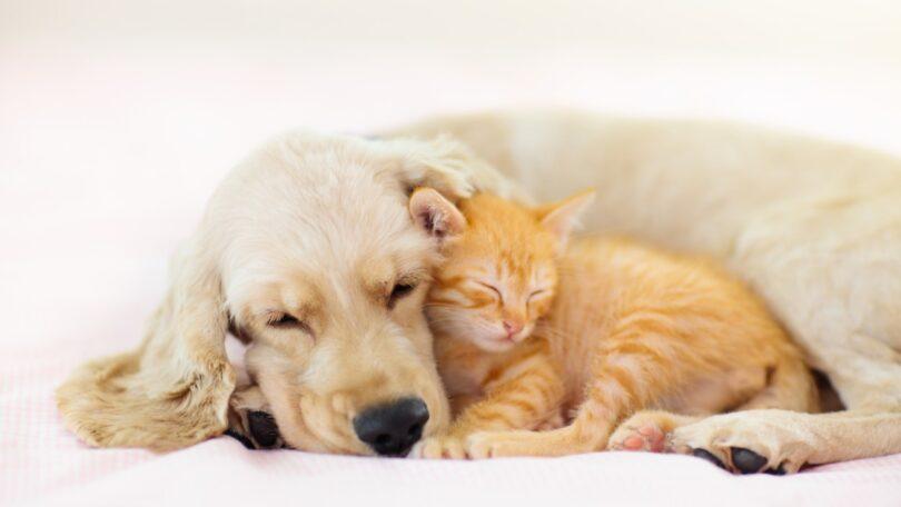 """O médico veterinário, Octávio Carraça Pereira, lembra que a desparasitação """"é importante tanto para a saúde dos nossos animais, como para a nossa""""."""