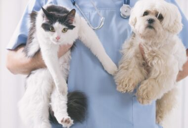 O Ministério da Agricultura reconheceu mais 25 médicos veterinários como Autoridade Sanitária Veterinária Concelhia.